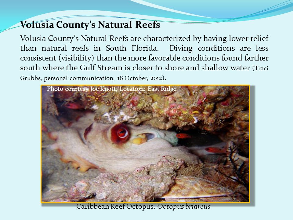 Volusia County's Natural Reefs Volusia County's Natural Reefs are characterized by having lower relief than natural reefs in South Florida.