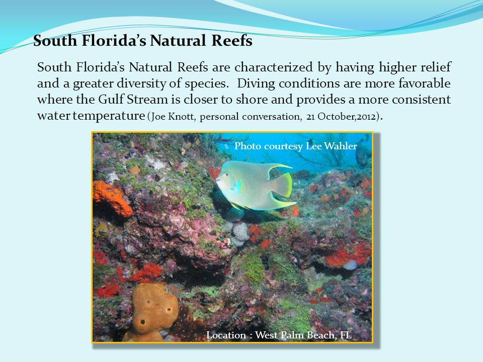 South Florida's Natural Reefs South Florida's Natural Reefs are characterized by having higher relief and a greater diversity of species.