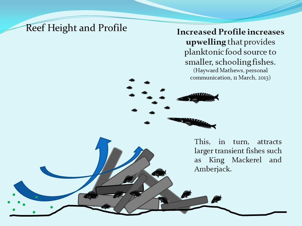 Reef Height and Profile Increased Profile increases upwelling that provides planktonic food source to smaller, schooling fishes.