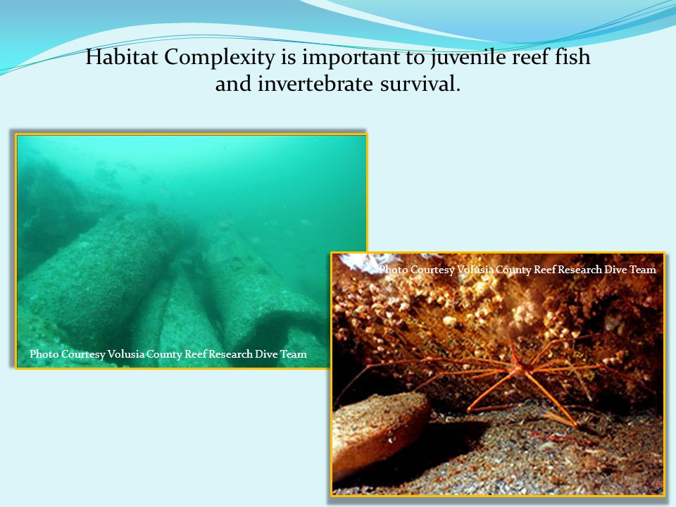 Habitat Complexity is important to juvenile reef fish and invertebrate survival.