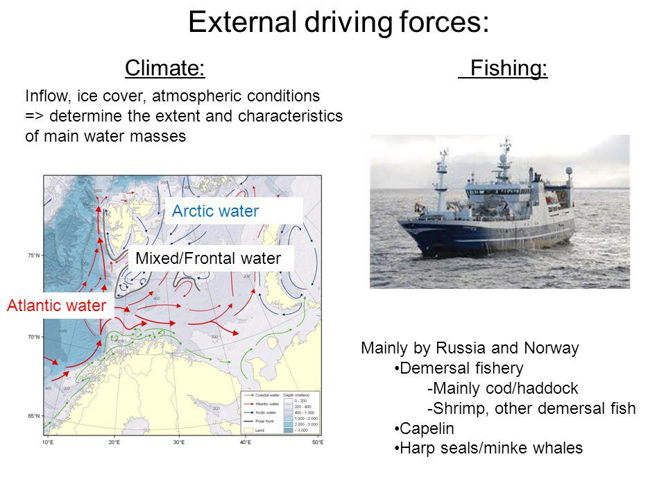 External driving forces: Mainly by Russia and Norway Demersal fishery -Mainly cod/haddock -Shrimp, other demersal fish Capelin Harp seals/minke whales Climate: Fishing: Inflow, ice cover, atmospheric conditions => determine the extent and characteristics of main water masses Atlantic water Arctic water Mixed/Frontal water
