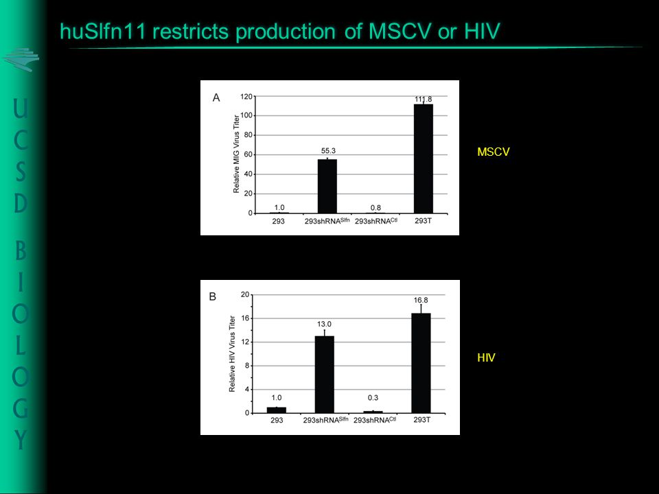 huSlfn11 restricts production of MSCV or HIV MSCV HIV