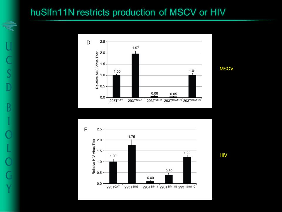 huSlfn11N restricts production of MSCV or HIV MSCV HIV