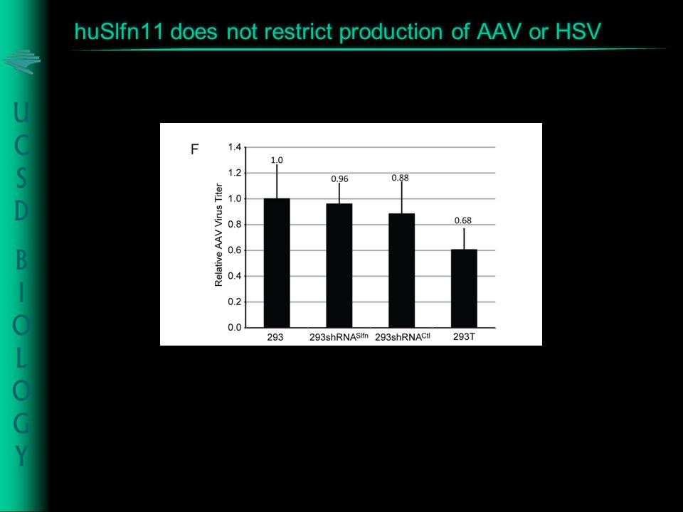 huSlfn11 does not restrict production of AAV or HSV