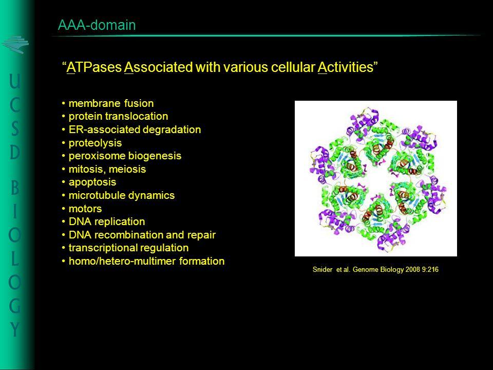 AAA-domain Snider et al.