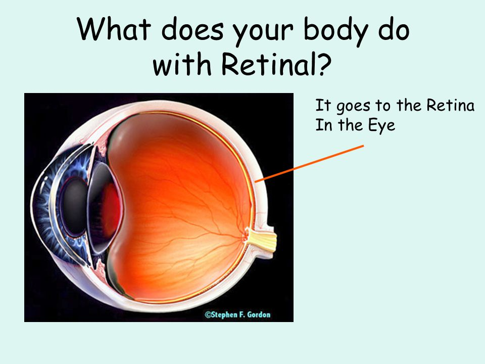 What does your body do with Retinal It goes to the Retina In the Eye
