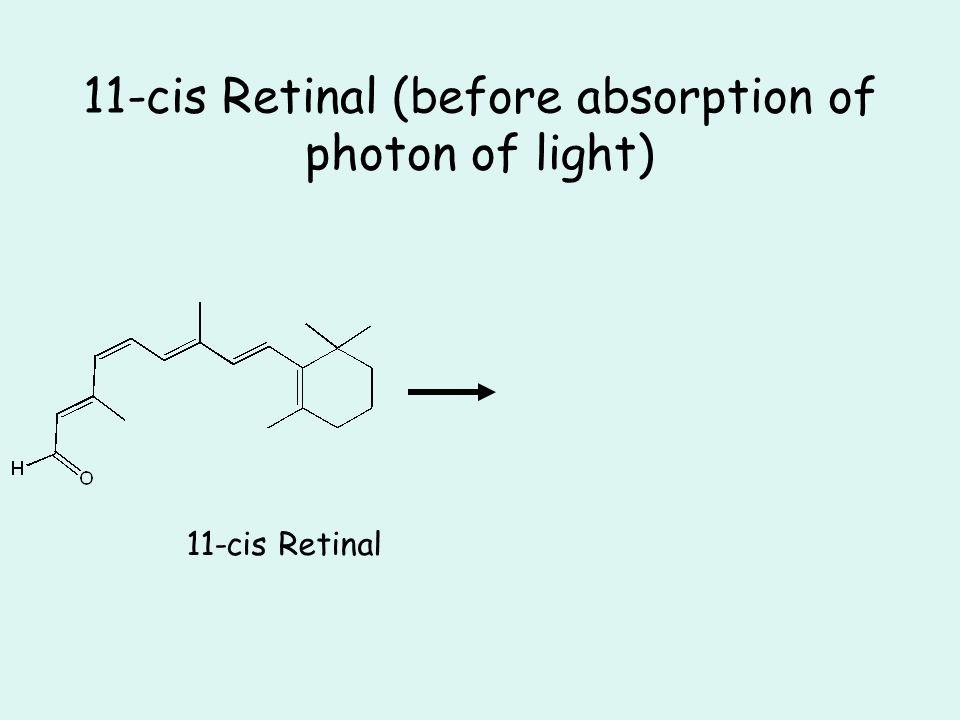 11-cis Retinal (before absorption of photon of light) 11-cis Retinal