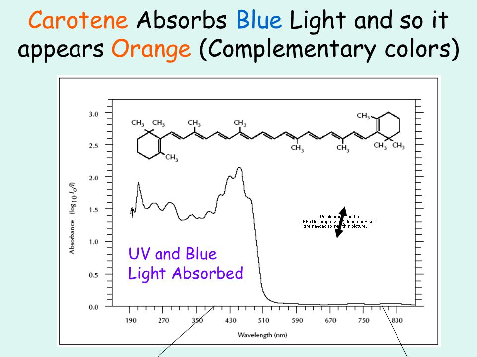 Carotene Absorbs Blue Light and so it appears Orange (Complementary colors) UV and Blue Light Absorbed