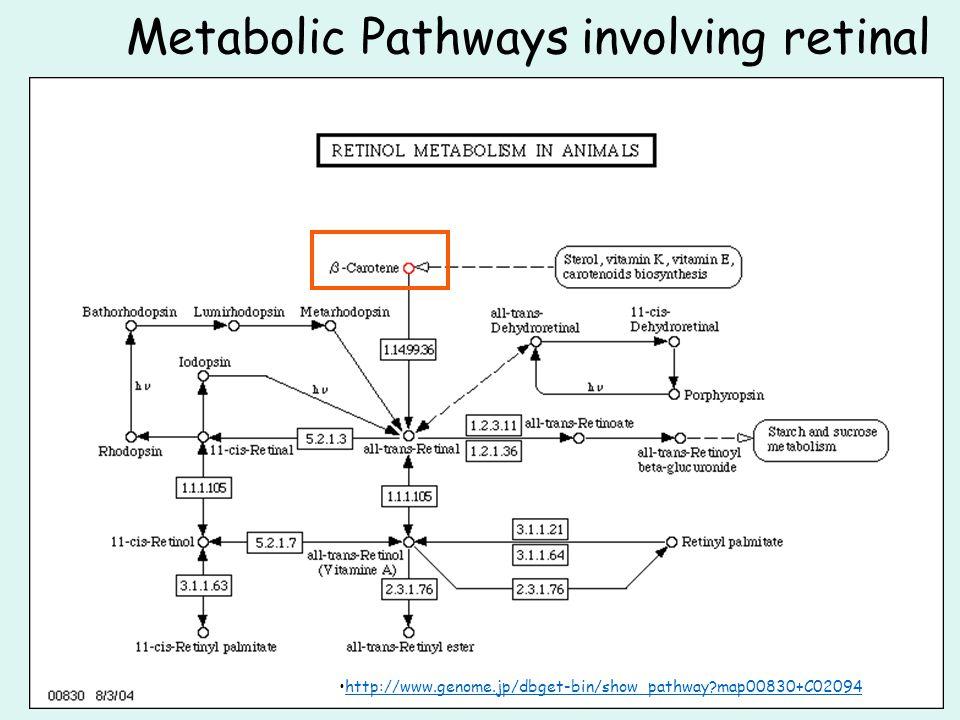 Metabolic Pathways involving retinal http://www.genome.jp/dbget-bin/show_pathway?map00830+C02094
