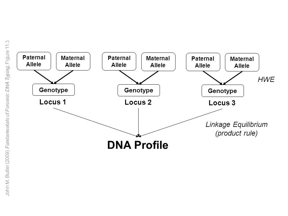 Paternal Allele Maternal Allele Genotype Locus 1 DNA Profile Paternal Allele Maternal Allele Genotype Locus 2 Paternal Allele Maternal Allele Genotype Locus 3 HWE Linkage Equilibrium (product rule) John M.