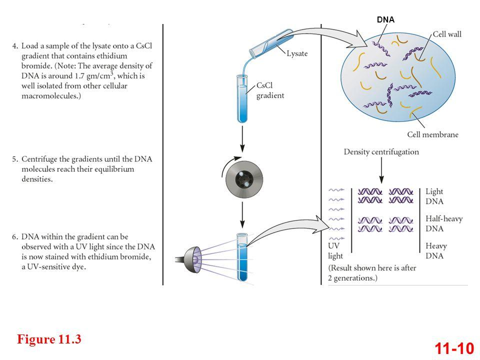 11-10 DNA