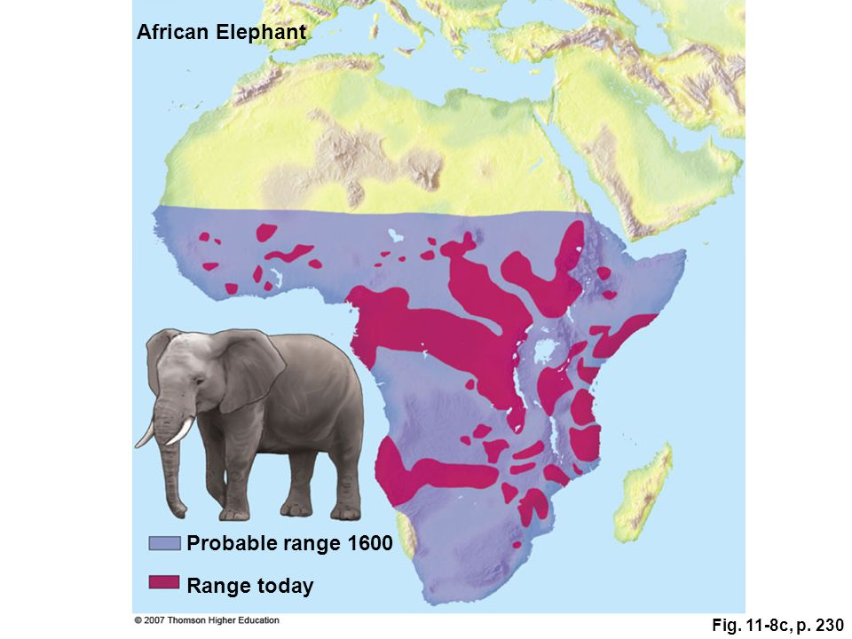 Fig. 11-8c, p. 230 Probable range 1600 African Elephant Range today