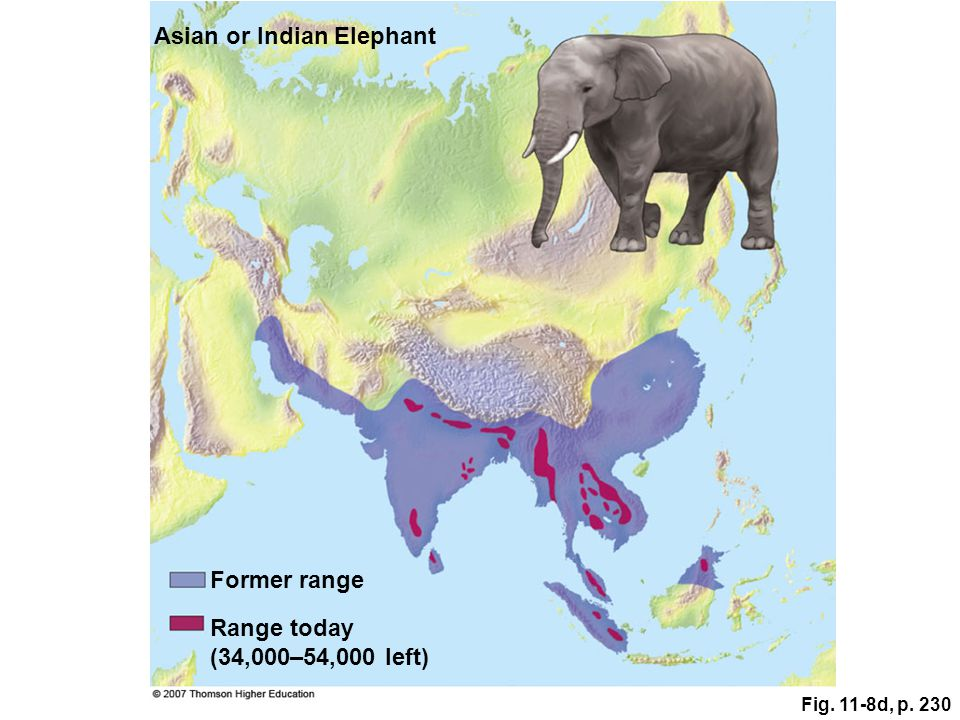 Fig. 11-8d, p. 230 Range today (34,000–54,000 left) Asian or Indian Elephant Former range