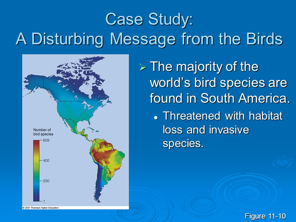 Case Study: A Disturbing Message from the Birds  The majority of the world's bird species are found in South America.