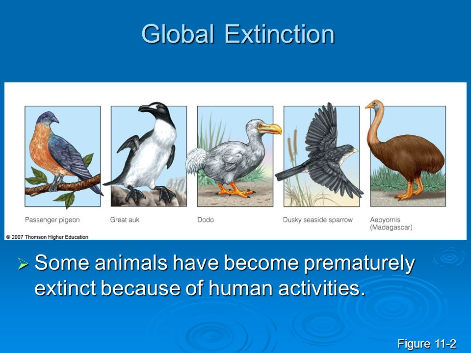 Global Extinction  Some animals have become prematurely extinct because of human activities.