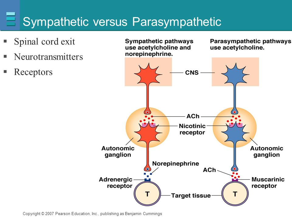 Copyright © 2007 Pearson Education, Inc., publishing as Benjamin Cummings Sympathetic versus Parasympathetic  Spinal cord exit  Neurotransmitters 