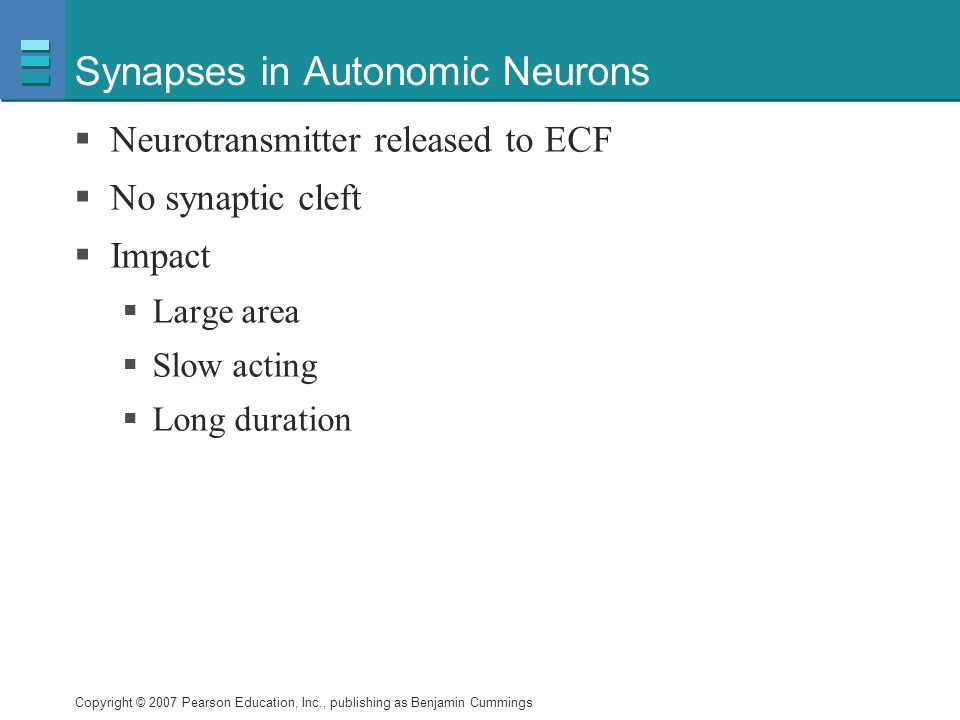 Copyright © 2007 Pearson Education, Inc., publishing as Benjamin Cummings Synapses in Autonomic Neurons  Neurotransmitter released to ECF  No synapt