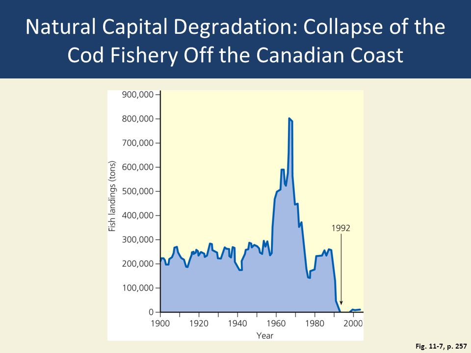 Natural Capital Degradation: Collapse of the Cod Fishery Off the Canadian Coast Fig. 11-7, p. 257