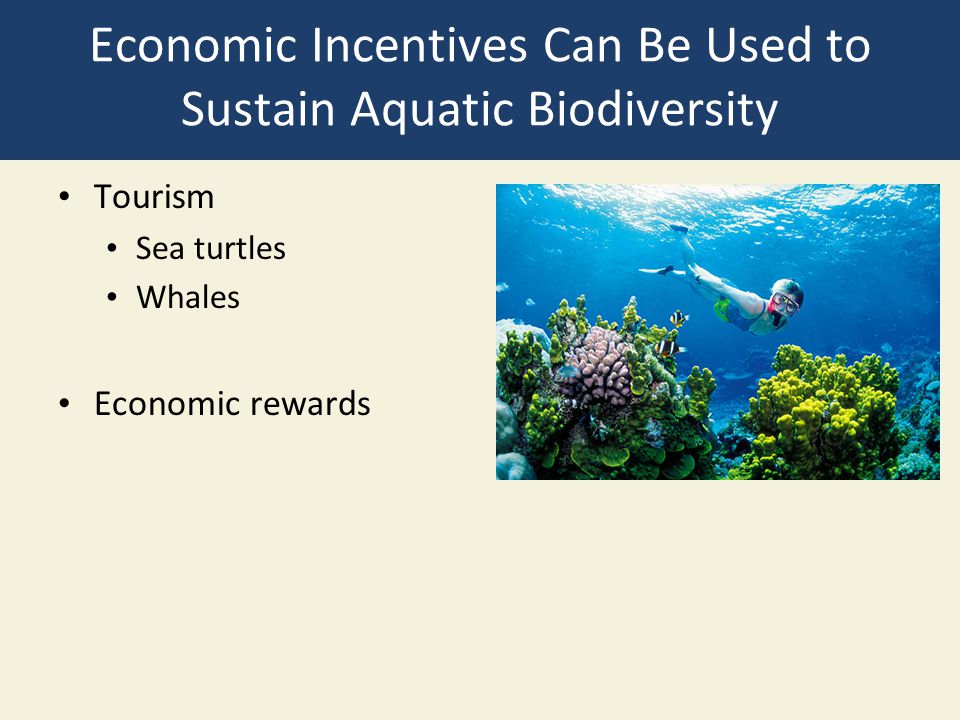 Economic Incentives Can Be Used to Sustain Aquatic Biodiversity Tourism Sea turtles Whales Economic rewards