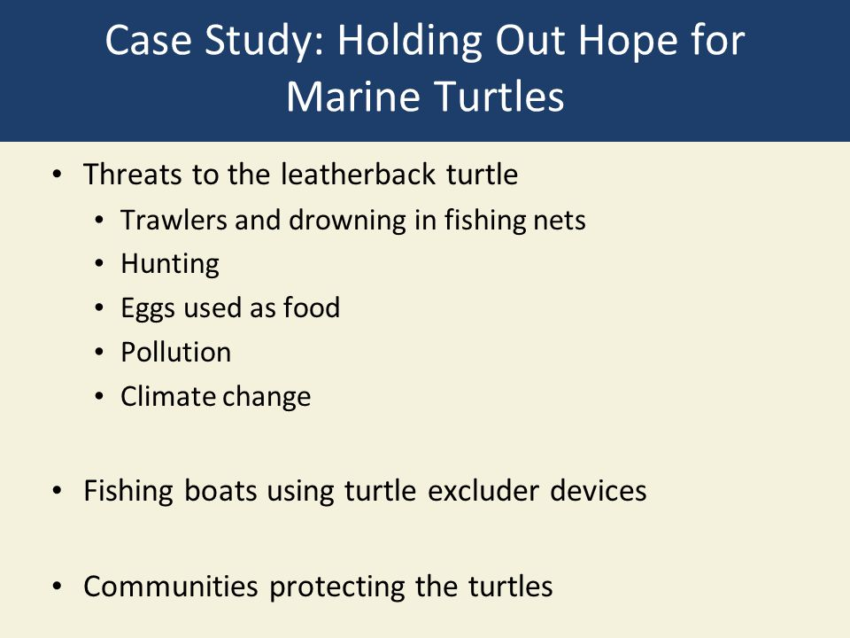 Case Study: Holding Out Hope for Marine Turtles Threats to the leatherback turtle Trawlers and drowning in fishing nets Hunting Eggs used as food Poll