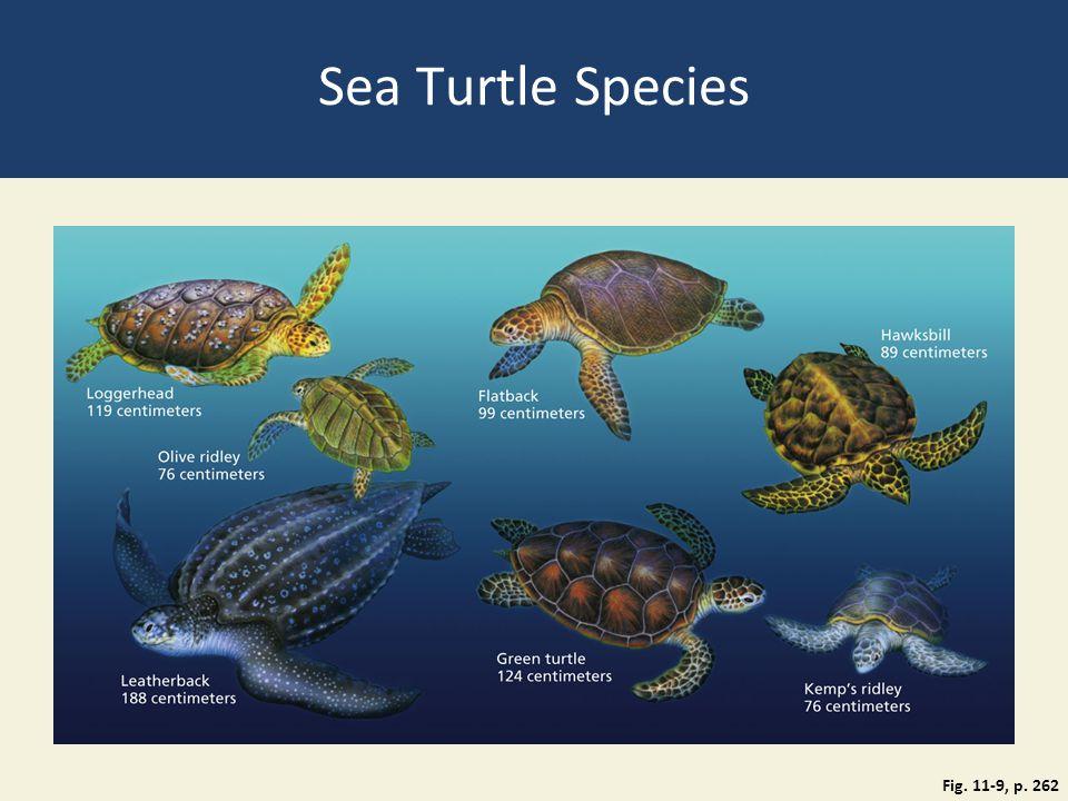 Sea Turtle Species Fig. 11-9, p. 262