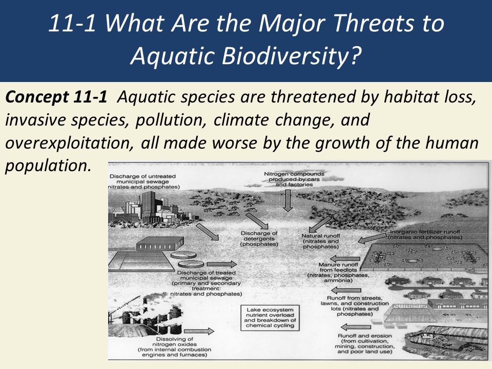 11-1 What Are the Major Threats to Aquatic Biodiversity? Concept 11-1 Aquatic species are threatened by habitat loss, invasive species, pollution, cli