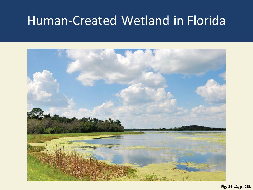Human-Created Wetland in Florida Fig. 11-12, p. 268