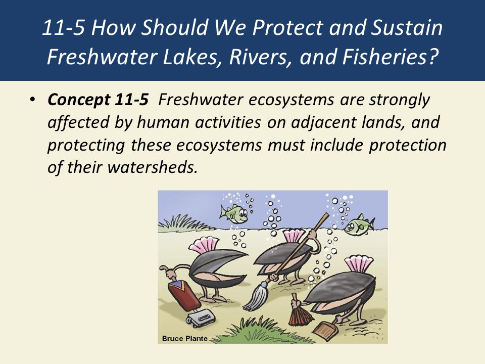 11-5 How Should We Protect and Sustain Freshwater Lakes, Rivers, and Fisheries? Concept 11-5 Freshwater ecosystems are strongly affected by human acti
