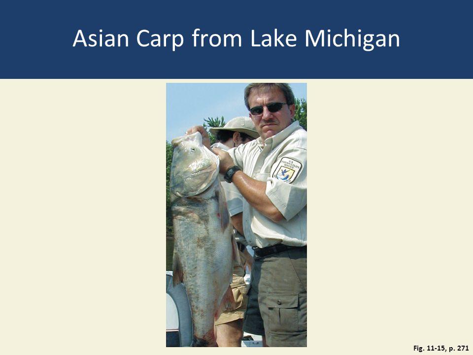 Asian Carp from Lake Michigan Fig. 11-15, p. 271
