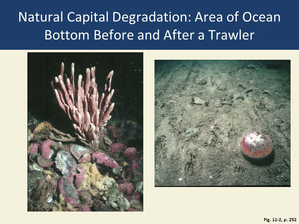 Natural Capital Degradation: Area of Ocean Bottom Before and After a Trawler Fig. 11-2, p. 252