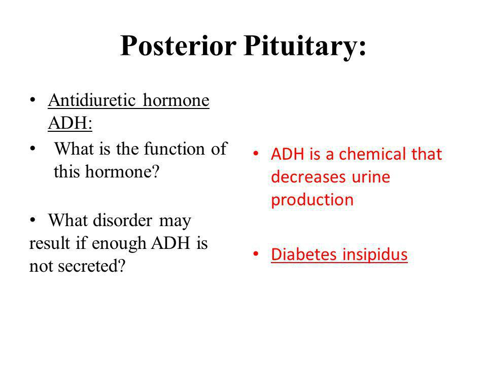 Posterior Pituitary: Antidiuretic hormone ADH: What is the function of this hormone? What disorder may result if enough ADH is not secreted? ADH is a