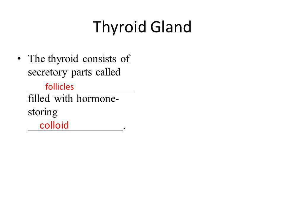 Thyroid Gland The thyroid consists of secretory parts called ___________________ filled with hormone- storing _________________. follicles colloid