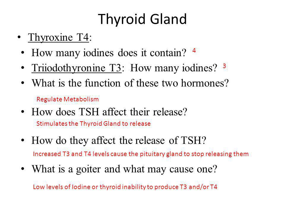 Thyroid Gland Thyroxine T4: How many iodines does it contain? Triiodothyronine T3: How many iodines? What is the function of these two hormones? How d