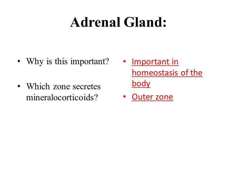 Adrenal Gland: Why is this important? Which zone secretes mineralocorticoids? Important in homeostasis of the body Outer zone