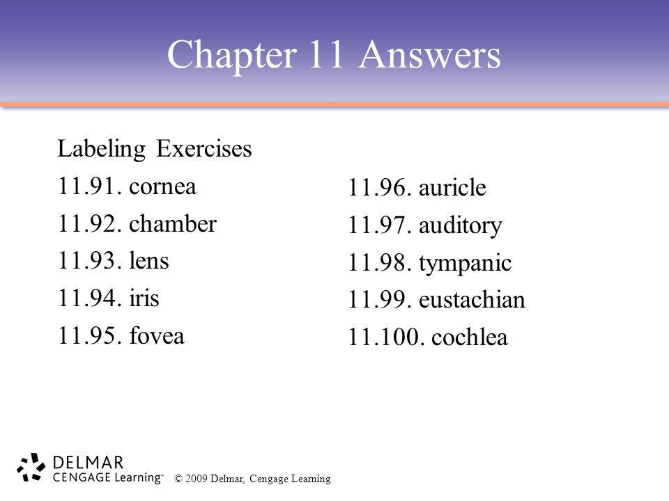 © 2009 Delmar, Cengage Learning Chapter 11 Answers Labeling Exercises 11.91. cornea 11.92. chamber 11.93. lens 11.94. iris 11.95. fovea 11.96. auricle