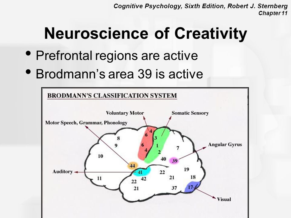 Cognitive Psychology, Sixth Edition, Robert J. Sternberg Chapter 11 Neuroscience of Creativity Prefrontal regions are active Brodmann's area 39 is act