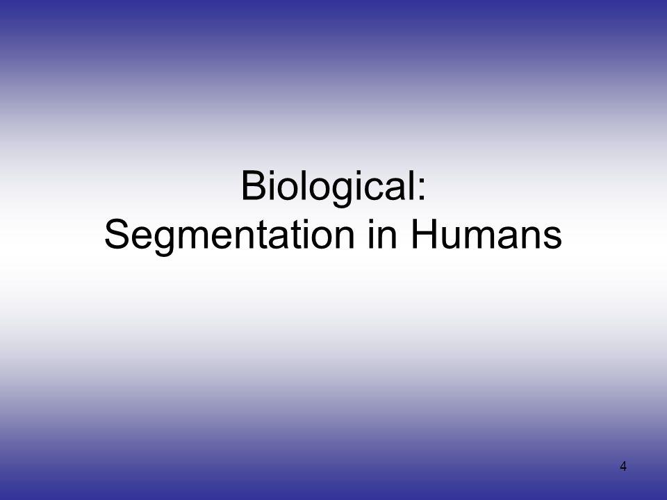 4 Biological: Segmentation in Humans