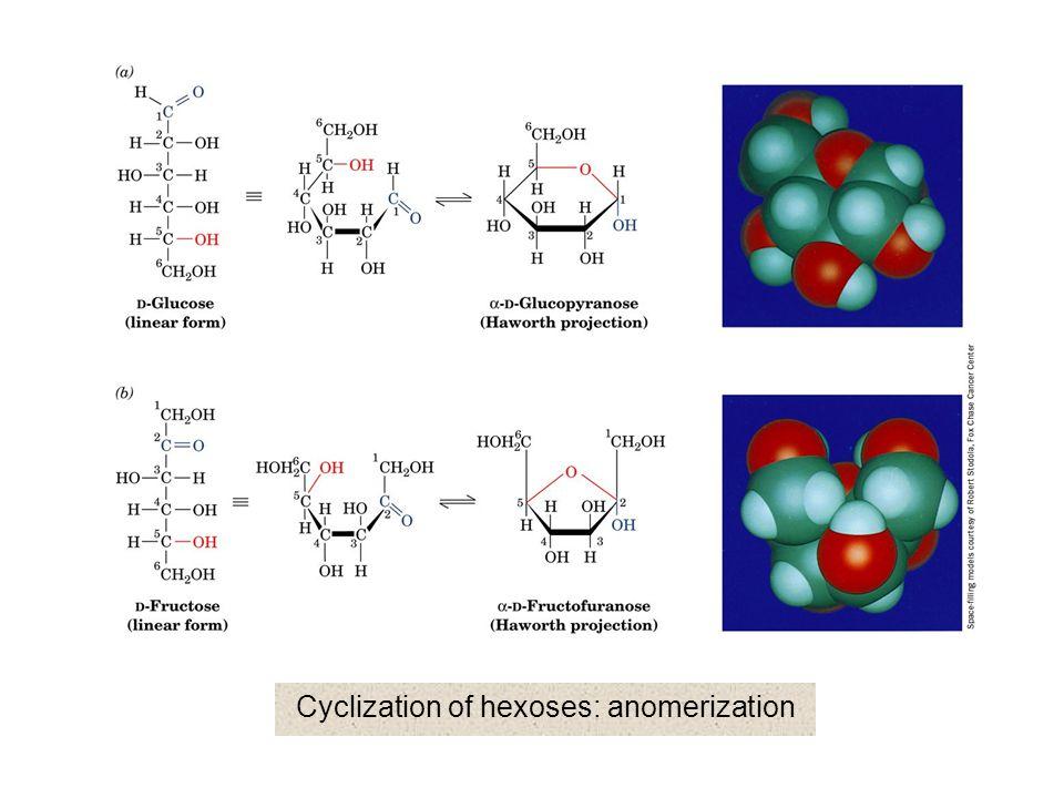 Common disaccharide:  -isomaltose