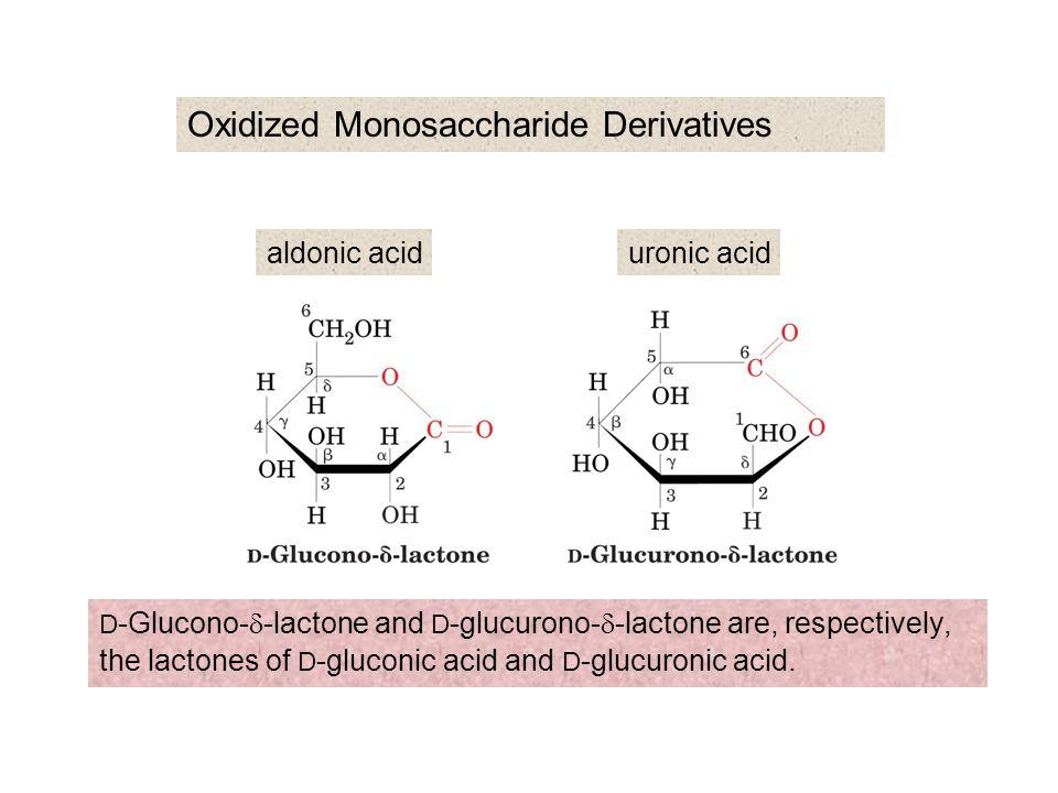 The reversible oxidation of L -ascorbic acid to L -dehydroascorbic acid lactones