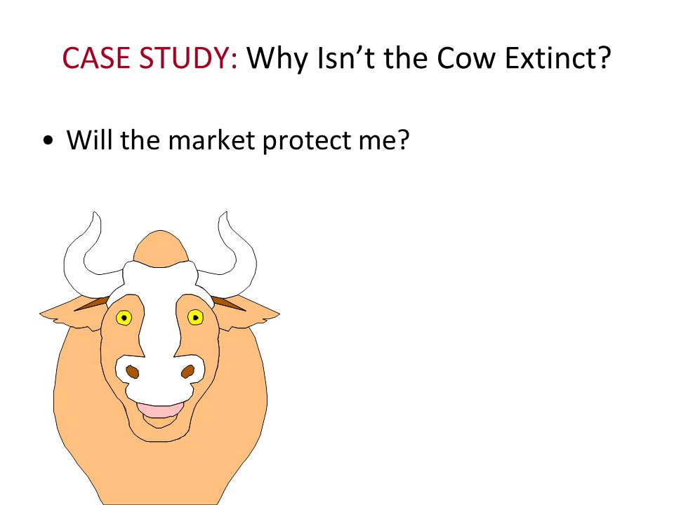 CASE STUDY: Why Isn't the Cow Extinct? Will the market protect me?