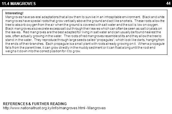 44 11.4 MANGROVES REFERENCES & FURTHER READING http://www.nationaltrust.org.ky/info/mangroves.html - Mangroves Interesting! Mangroves have several ada