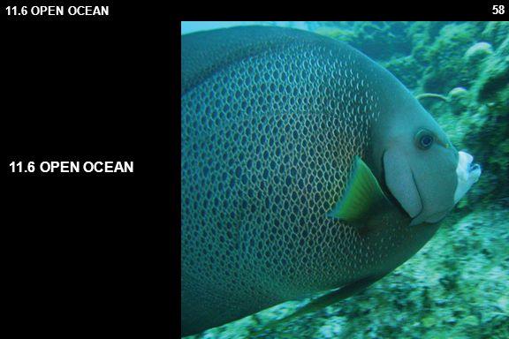 58 11.6 OPEN OCEAN