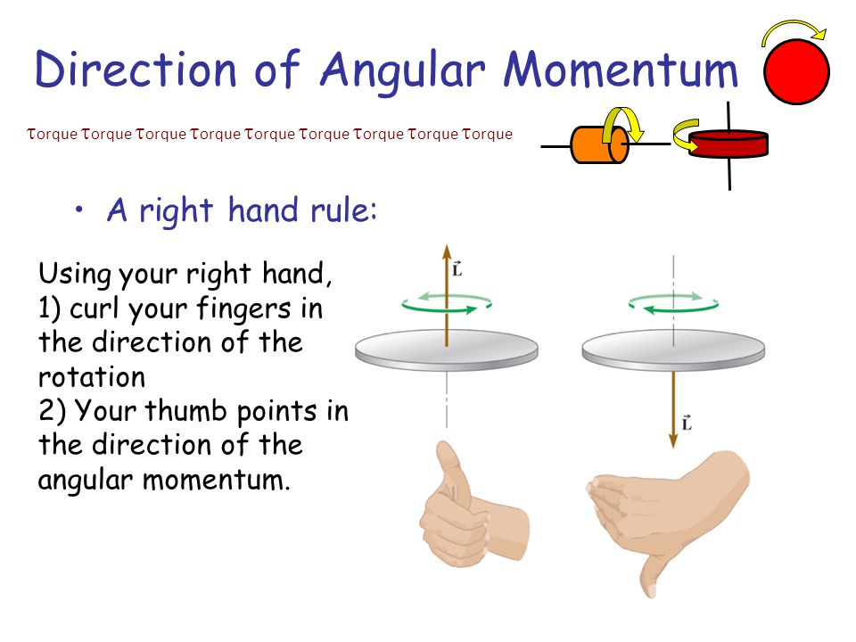  orque  orque  orque  orque  orque  orque  orque  orque  orque Direction of Angular Momentum A right hand rule: Using your right hand, 1) curl your fingers in the direction of the rotation 2) Your thumb points in the direction of the angular momentum.