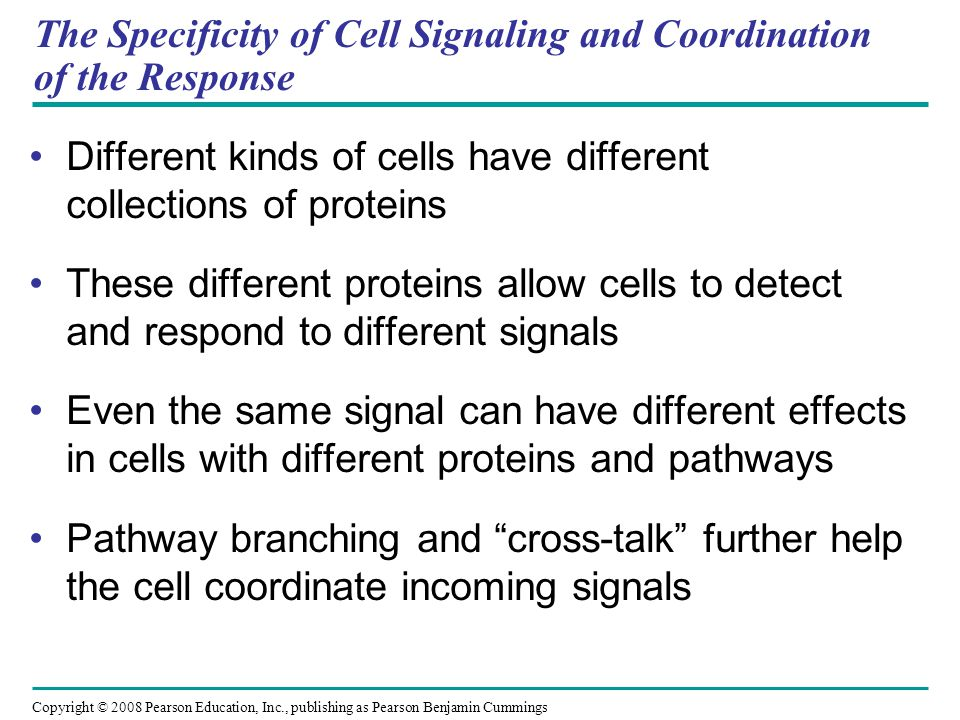 The Specificity of Cell Signaling and Coordination of the Response Different kinds of cells have different collections of proteins These different pro