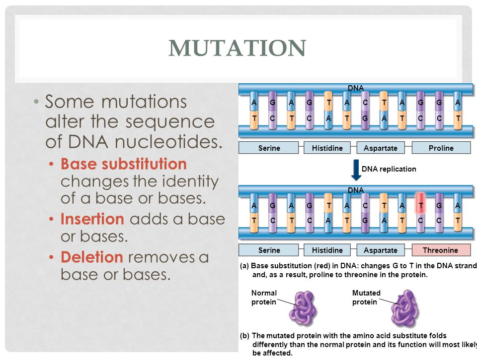 MUTATION Some mutations alter the sequence of DNA nucleotides.