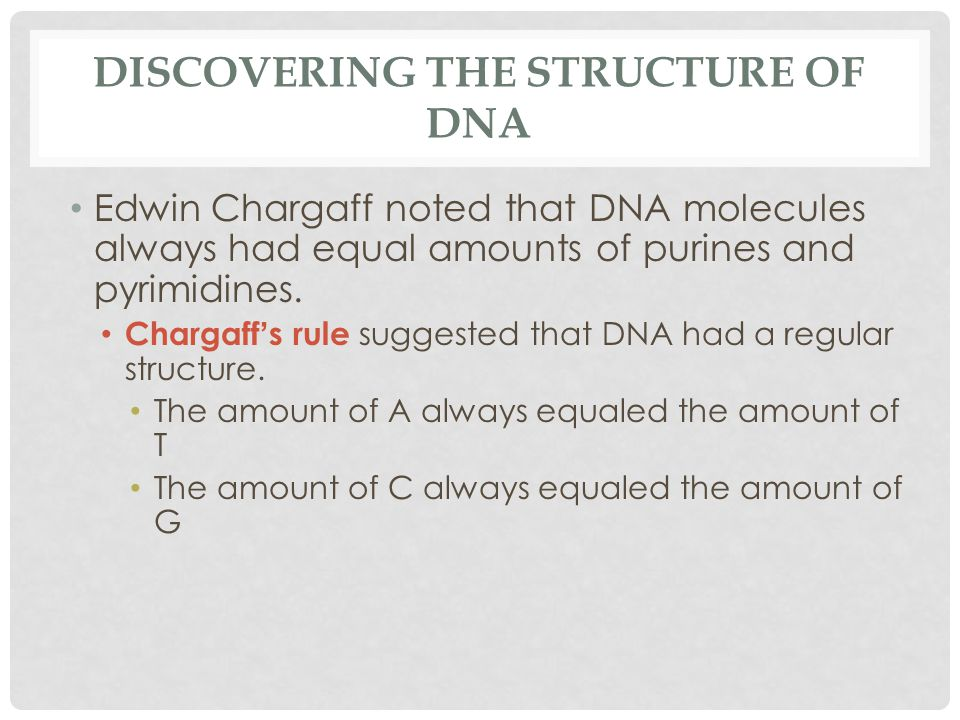 DISCOVERING THE STRUCTURE OF DNA Edwin Chargaff noted that DNA molecules always had equal amounts of purines and pyrimidines.