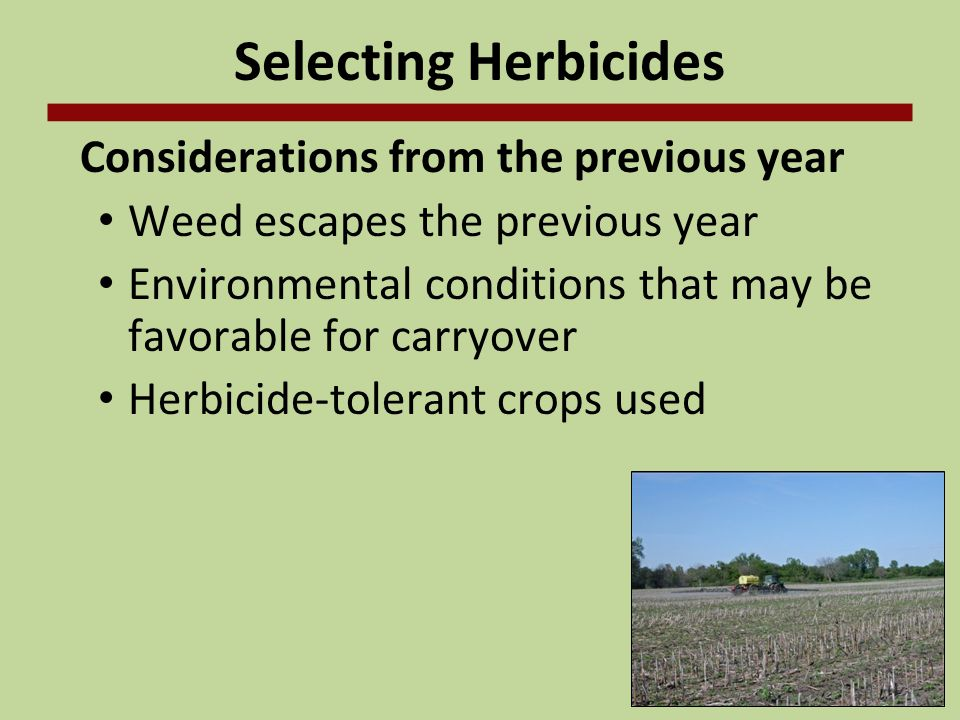 Selecting Herbicides Considerations from the previous year Weed escapes the previous year Environmental conditions that may be favorable for carryover