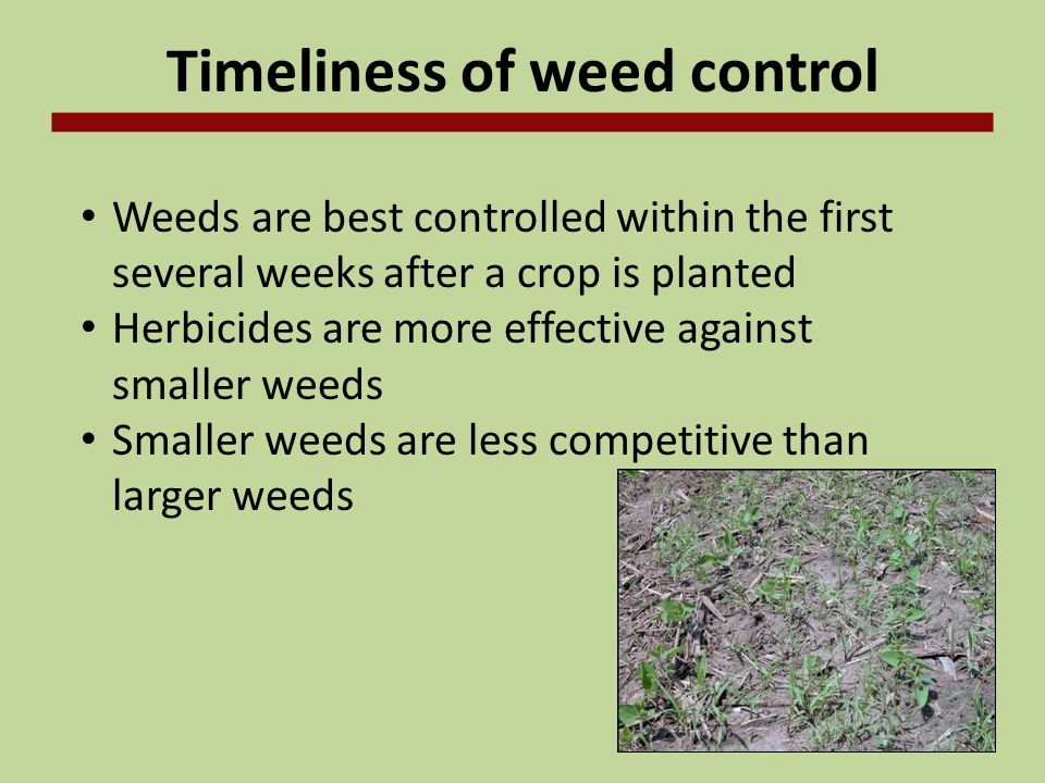 Selecting Herbicides Considerations from the previous year Weed escapes the previous year Environmental conditions that may be favorable for carryover Herbicide-tolerant crops used