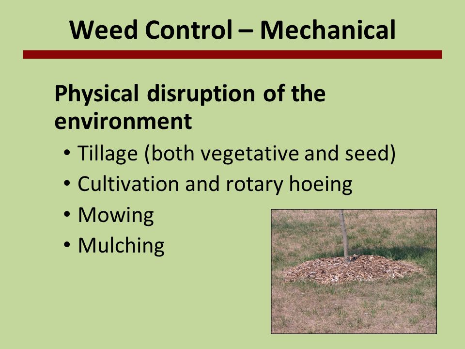 Weed Control - Chemical Herbicide use Selective Nonselective –Burn-down treatment Rate and timing are critical