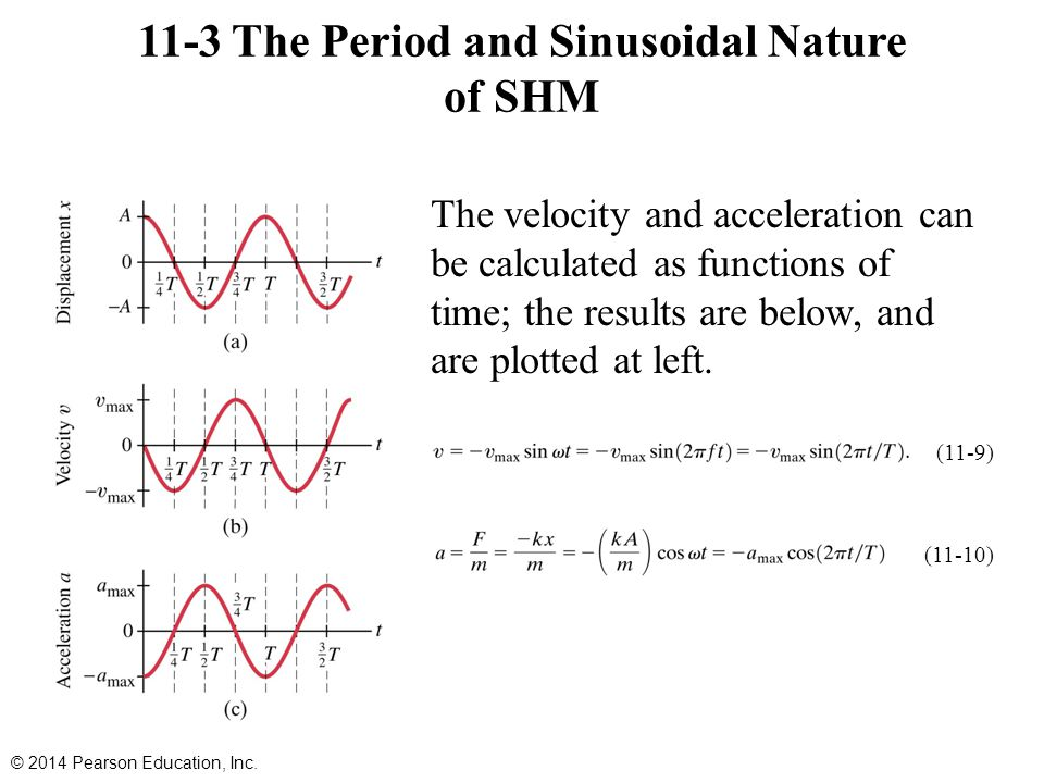 11-3 The Period and Sinusoidal Nature of SHM The velocity and acceleration can be calculated as functions of time; the results are below, and are plot